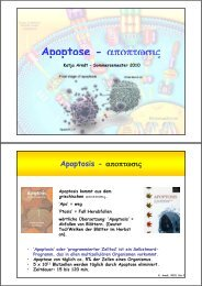 Apoptose - αποπτωσις p p ς - molbiotech.uni-freiburg.de