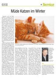 Müde Katzen im Winter - Steirischer Seniorenbund