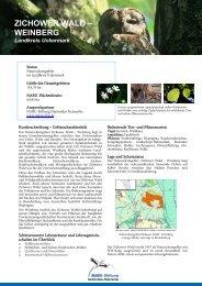 Zichower Wald - NABU-Stiftung Nationales Naturerbe