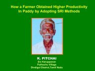 How a Farmer Obtained Higher Productivity in Paddy by ... - SRI - India