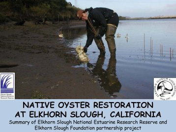 Download an overview of the Olympia Oyster research and ...