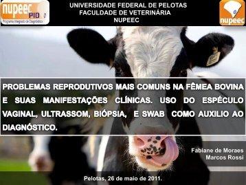 Problemas reprodutivos mais comuns na fêmea bovina e suas ...