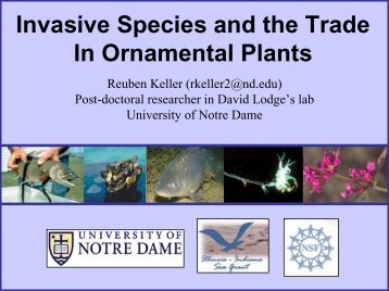 Invasive Species and the Trade In Ornamental Plants - Great Lakes ...