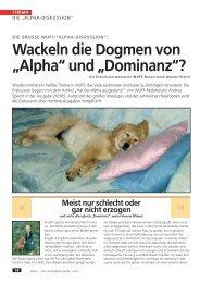 """Wackeln die Dogmen von """"Alpha"""" und """"Dominanz ... - WUFF - online"""