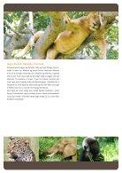 Fra giraffer til gorillaer - Page 4
