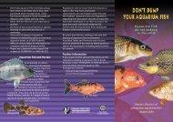 Don't dump your aquarium fish - PIRSA - SA.Gov.au