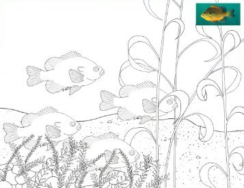 Dollar Sunfish Coloring Page
