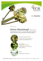 Kleiner Wiesenknopf Sanguisorba minor - EGK-Gesundheitskasse