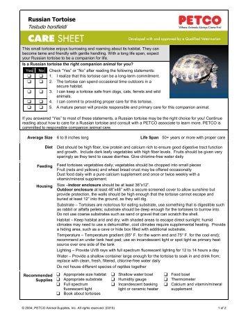 Russian Tortoise Care Sheet - Petco