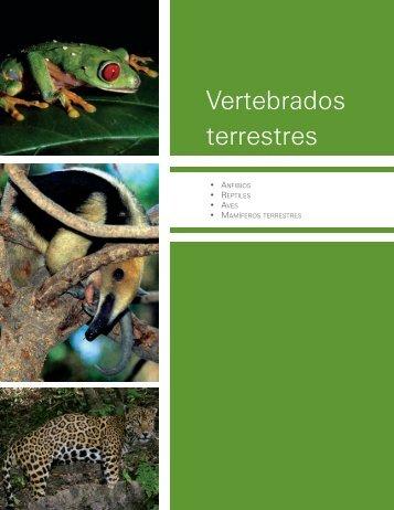 Vertebrados terrestres - Biodiversidad Mexicana