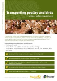 Transporting poultry and birds-Animal welfare requirements