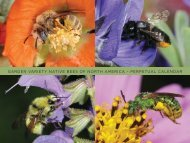 garden variety native bees of north america - The Xerces Society