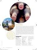 Südafrika - Schweizerische Weinzeitung - Seite 4