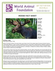 MOOSE FACT SHEET - World Animal Foundation