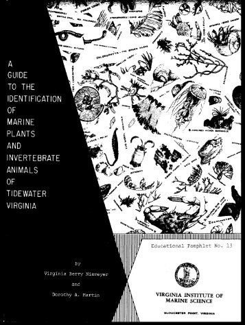Guide to the identification of marine plants and invertebrate animals ...
