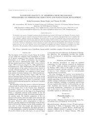 PLEOMOTHRA FRAGILIS N. SP. (REMIPEDIA) FROM THE ... - BioOne