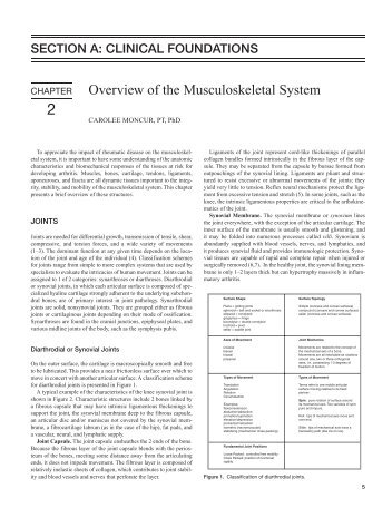 Structure And Function Of The Musculoskeletal System Functions Of