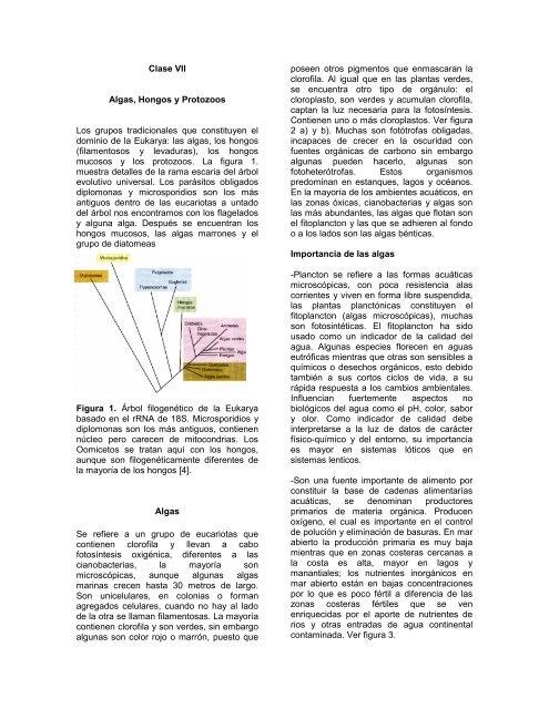 Clase Vii Algas Hongos Y Protozoos Los Grupos Tradicionales