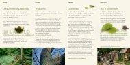 Faltblatt Wildkatzenpfad- Wanderführer - Nationalpark Hainich