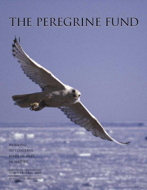 2001 Newsletter - The Peregrine Fund