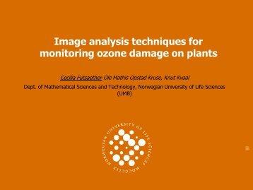 Image analysis techniques for monitoring ozone damage on ... - UMB