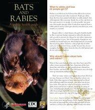 BATS RABIES
