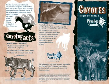 Coyote Brochure - Pinellas County
