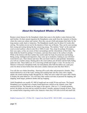 About the Humpback Whales of Rurutu - Dolphin Connection