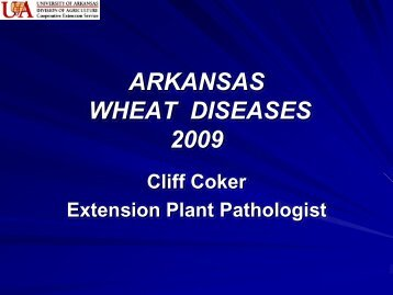ARKANSAS WHEAT DISEASES 2009