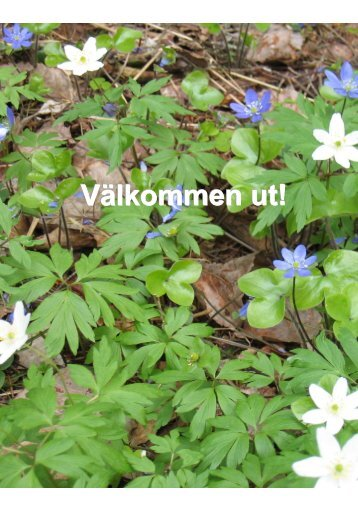 Välkommen ut - Sundsvall