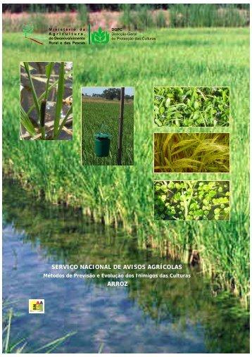 Métodos de previsão e evolução dos inimigos da cultura do arroz