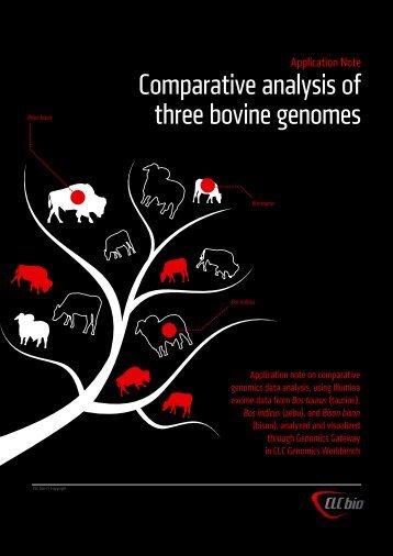 Comparative analysis of three bovine genomes