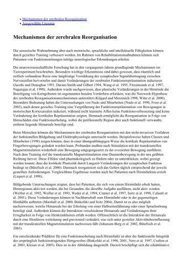 Mechanismen der zerebralen Reorganisation - Kompetenznetz ...