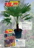 Mediterrane Pflanzen - Seite 5
