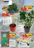 Mediterrane Pflanzen - Seite 6