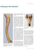 Knochenfunde geben Rätselauf - Carl Zeiss - Seite 4