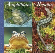 and reptiles