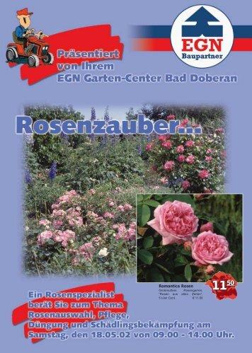 Romantica Rosen