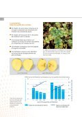 Fertilisation des pommes de terre - K+S KALI GmbH - Page 6