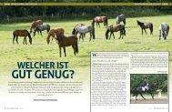 WELCHER IST GUT GENUG? - Mecklenburger Pferde