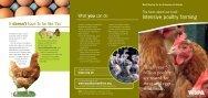 Intensive poultry farming - WSPA