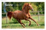 Pferde fotografieren - Vorreiter Deutschland