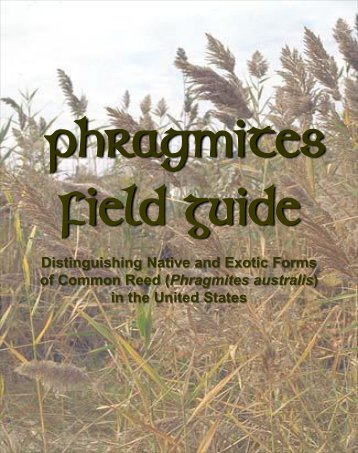 Phragmites Field Guide - National Park Service
