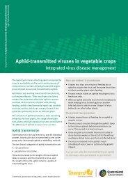 Aphid-transmitted viruses in vegetable crops
