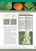 Aphid-transmitted viruses in vegetable crops - Page 2