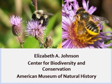 Elizabeth Johnson, American Museum of Natural History - bees