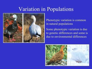 Variation in Populations.pdf
