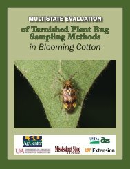 in Blooming Cotton - eXtension
