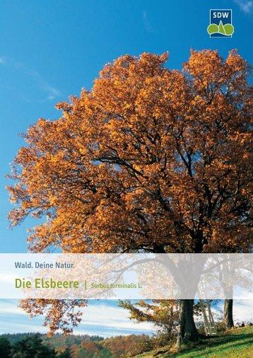 3015537 SDW Elsbeere.indd - Schutzgemeinschaft Deutscher Wald