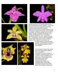 Miniature Orchids - Page 3